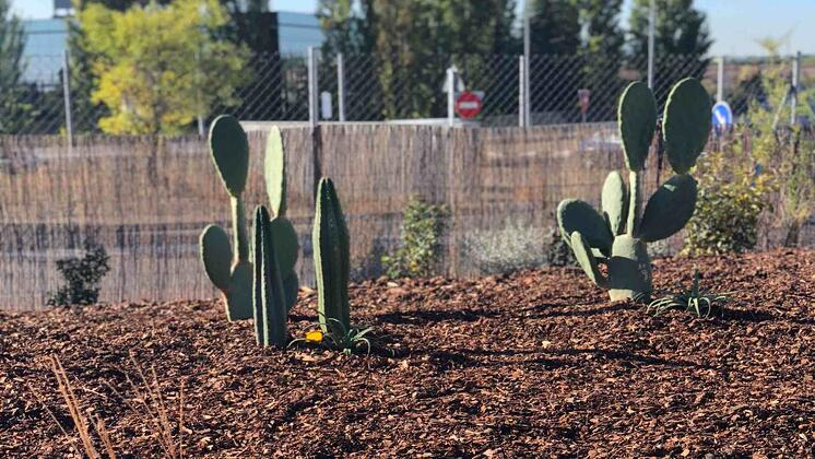 We have a cactus garden in our 3,000m2 outdoor classroom and children are taught how to build confidence through Risky Play.